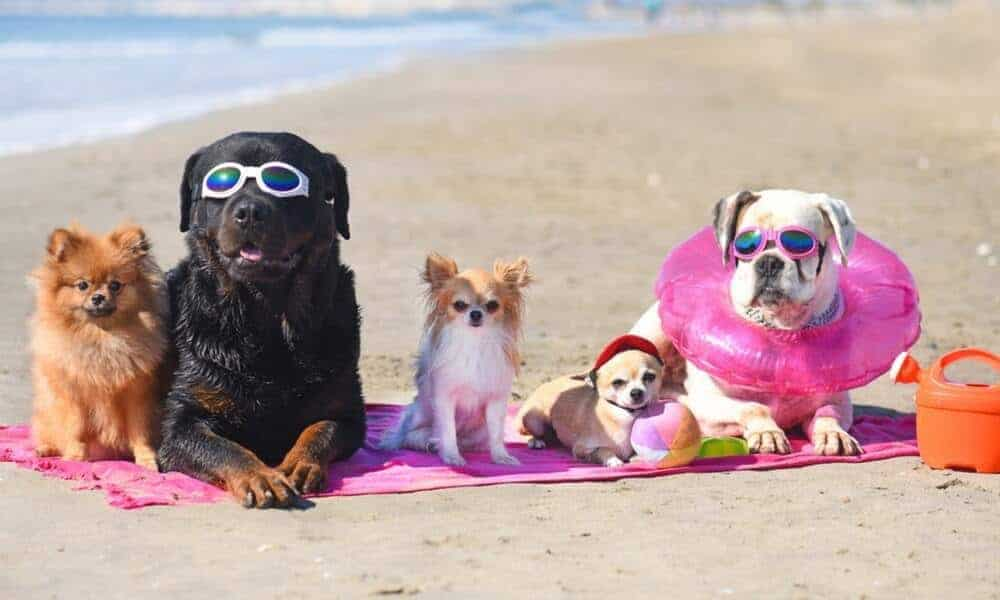 dog toys for the beach