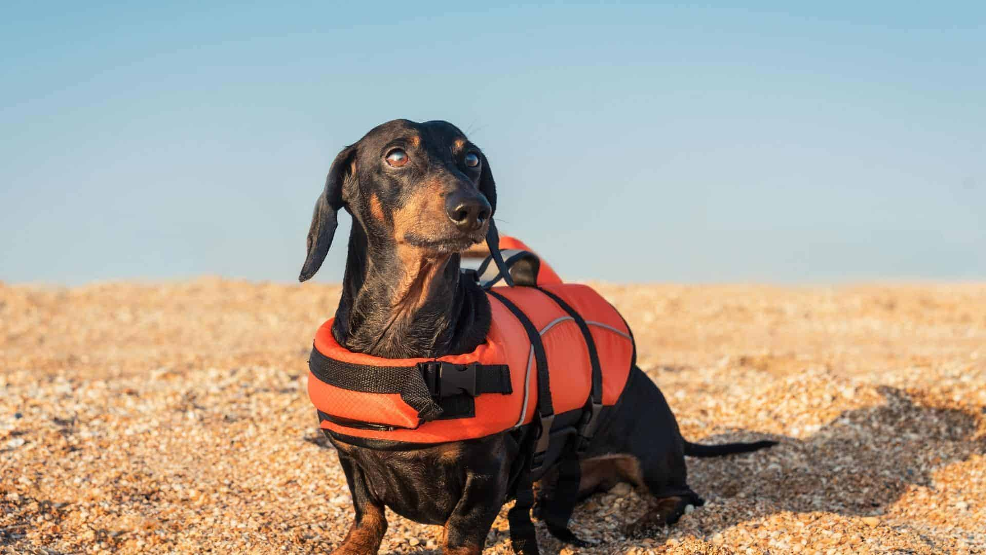 best life jackets for small dogs
