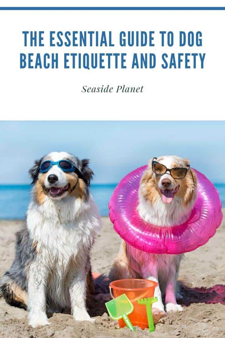 The Essential Guide to Dog Beach Etiquette and Safety