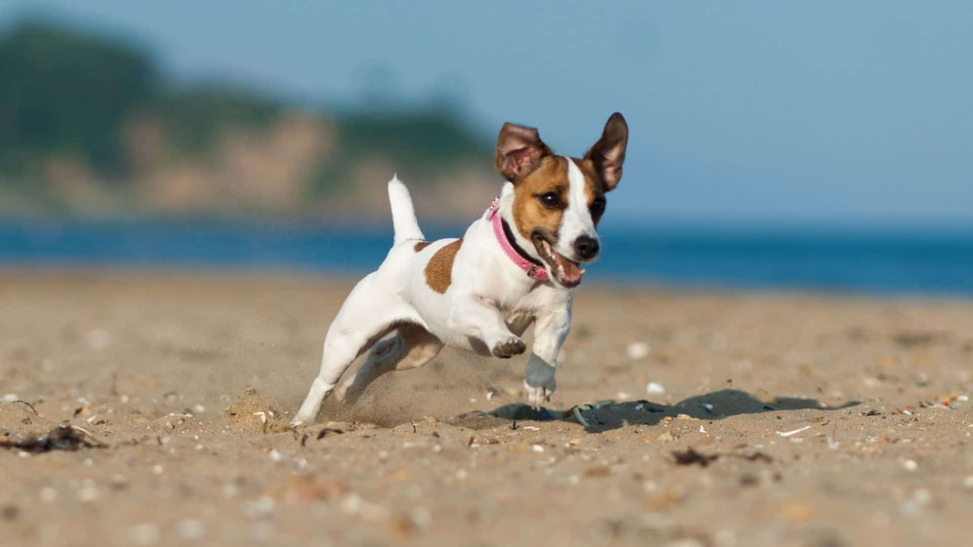 dog beach safety and etiquette
