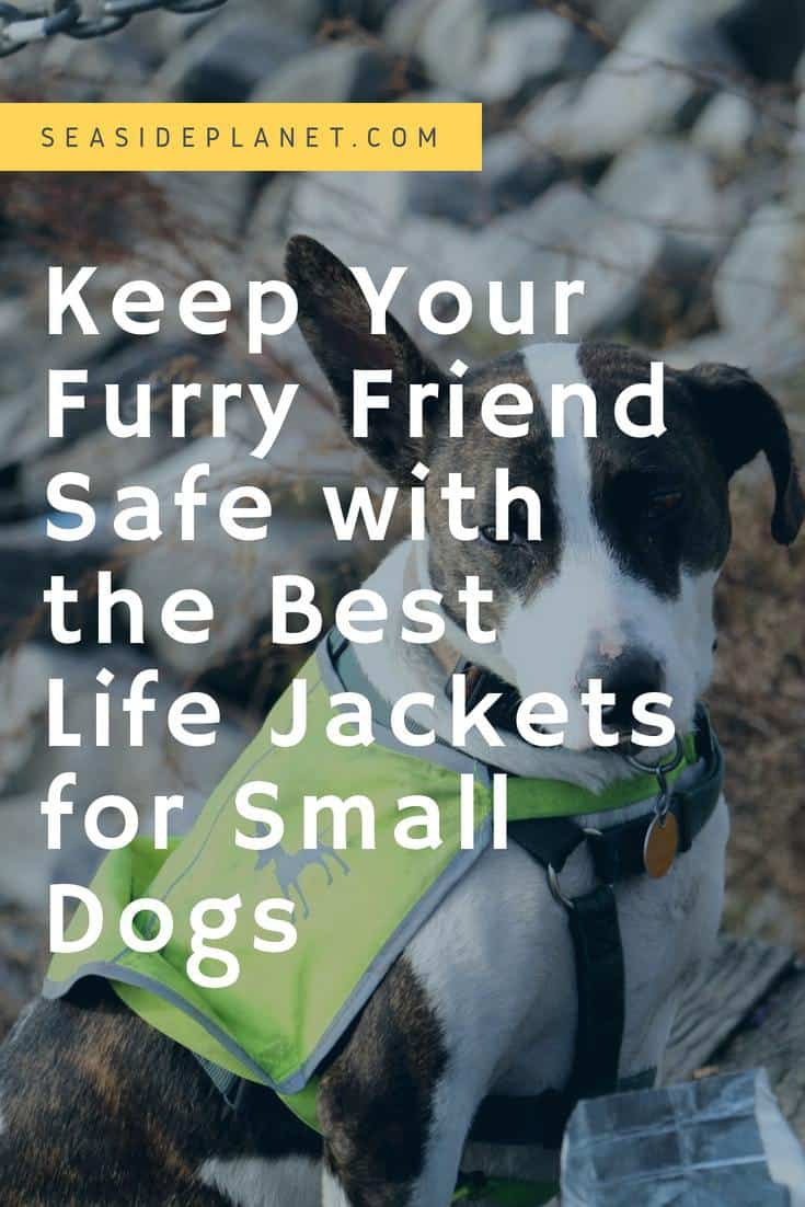 Discover the Best Life Jackets for Small Dogs