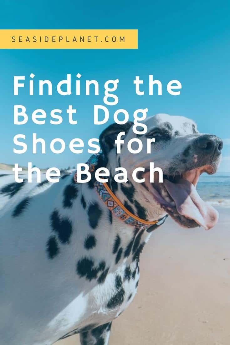 Finding the Best Dog Shoes for the Beach
