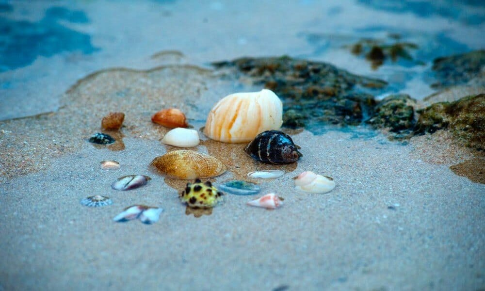 look for seashells