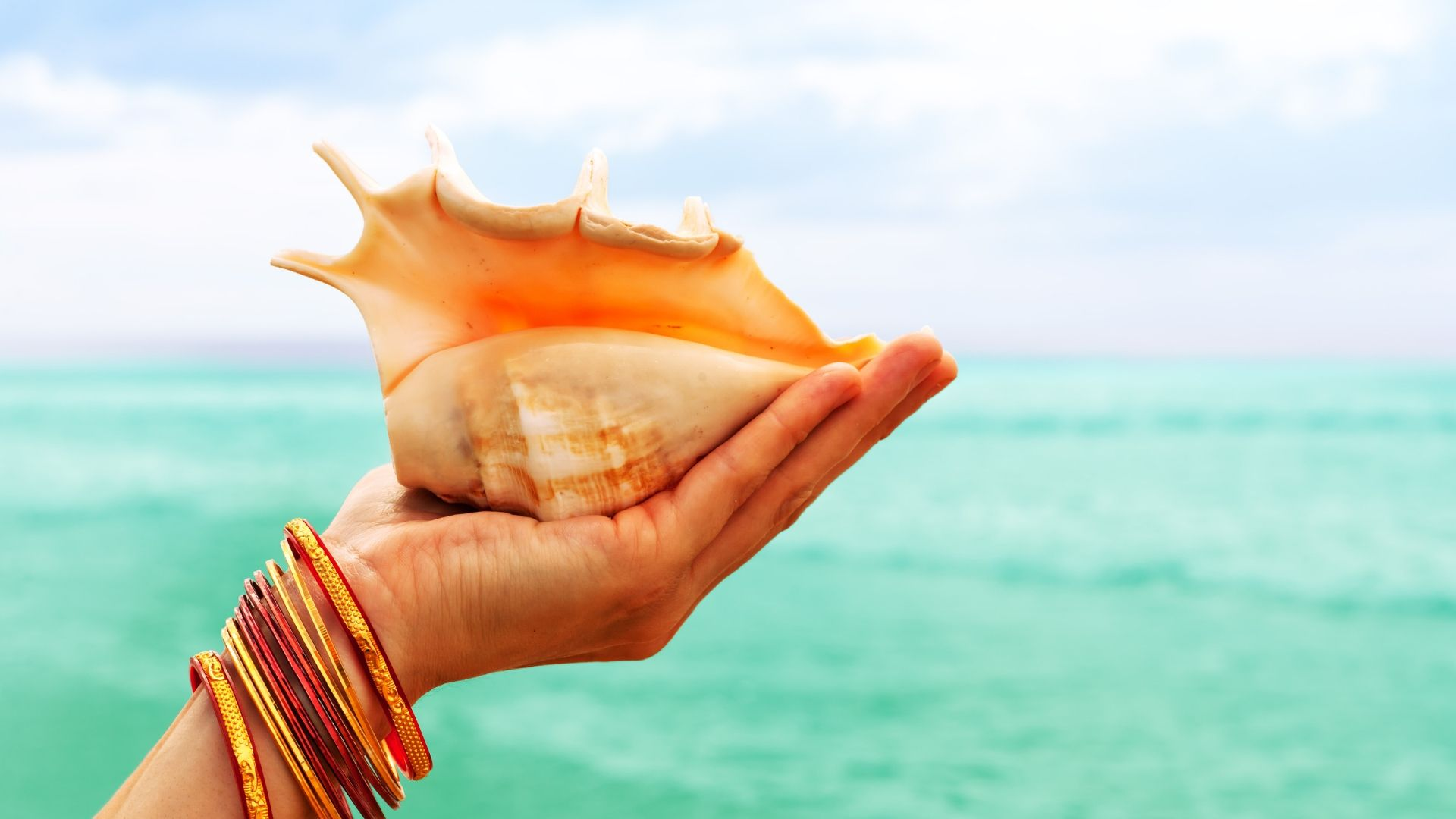 When Is the Best Time to Look for Seashells on the Beach?
