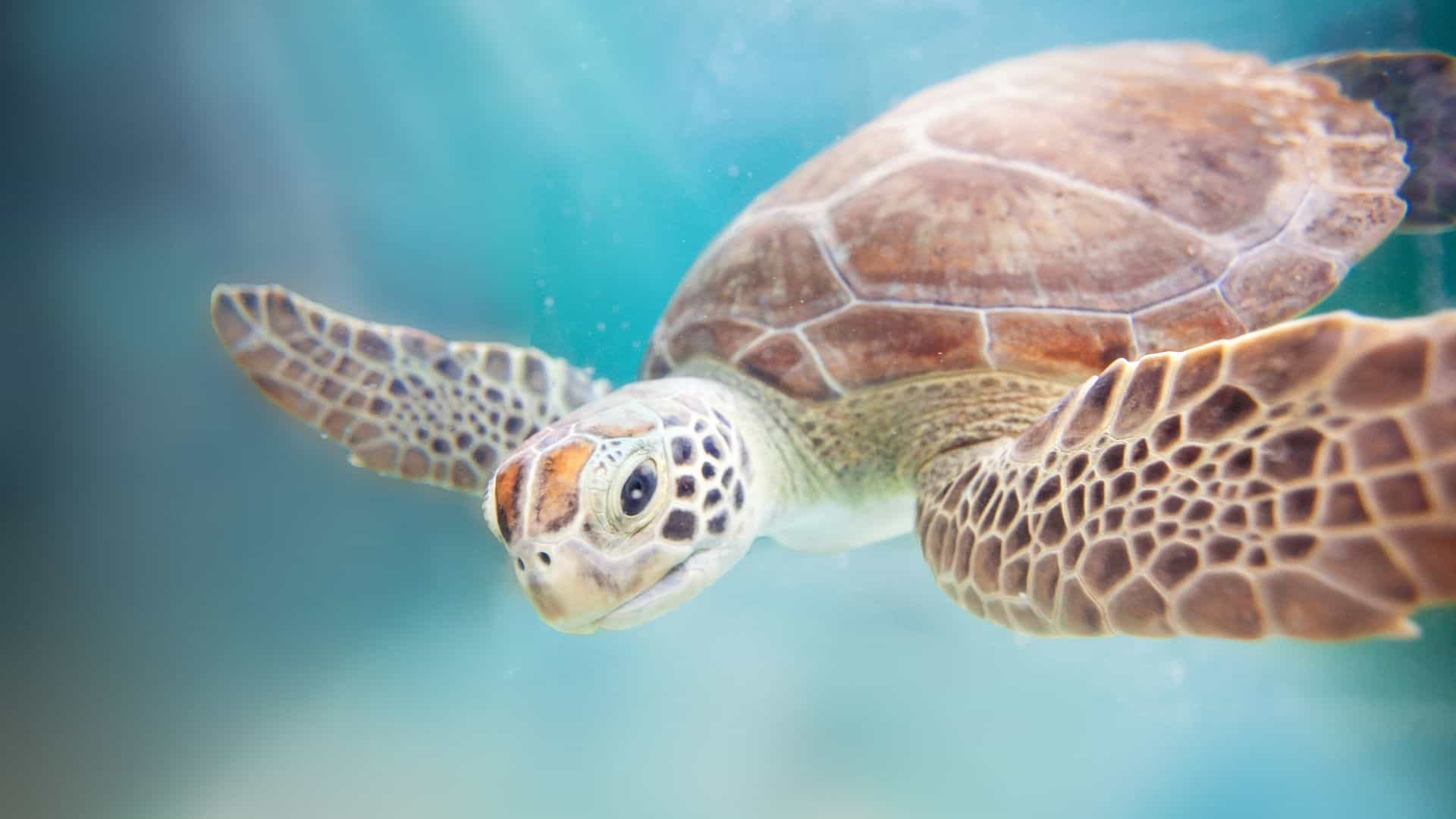 why is ocean conservation important