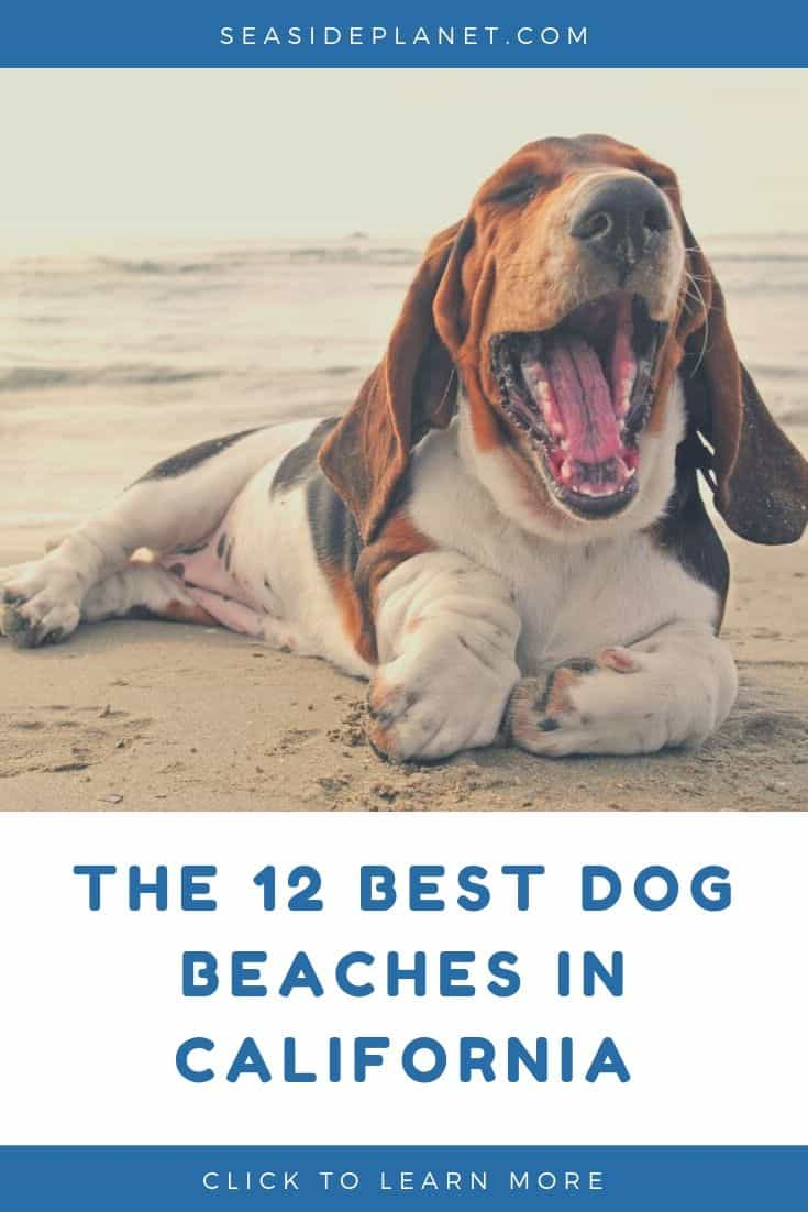 The 12 Best Dog Beaches In California