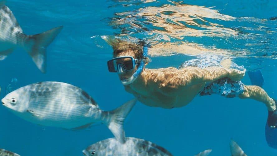 best snorkeling in california