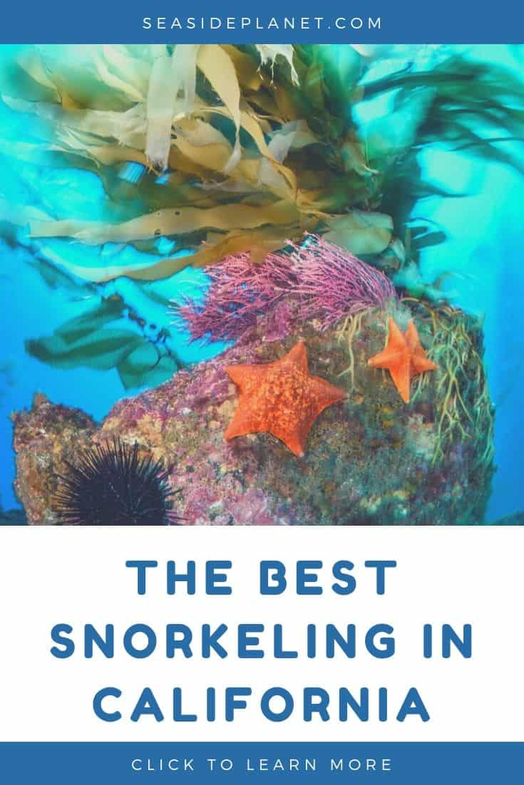 Best Snorkeling in California (2020 Guide)