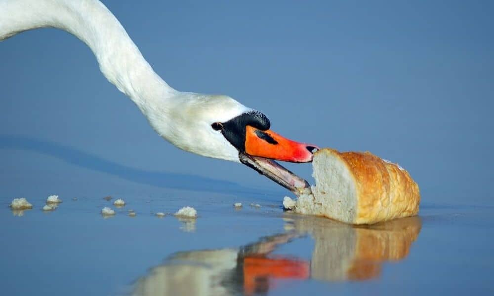 bird eating a loaf of bread