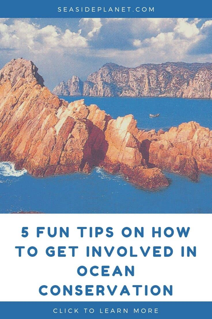 5 Fun Tips on How to Get Involved In Ocean Conservation