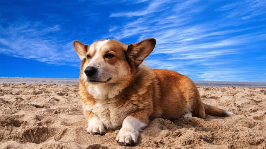 how to keep your dog cool at the beach