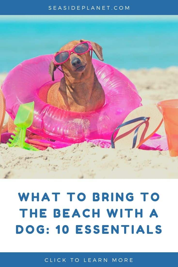 What To Bring To The Beach With A Dog: 10 Essentials