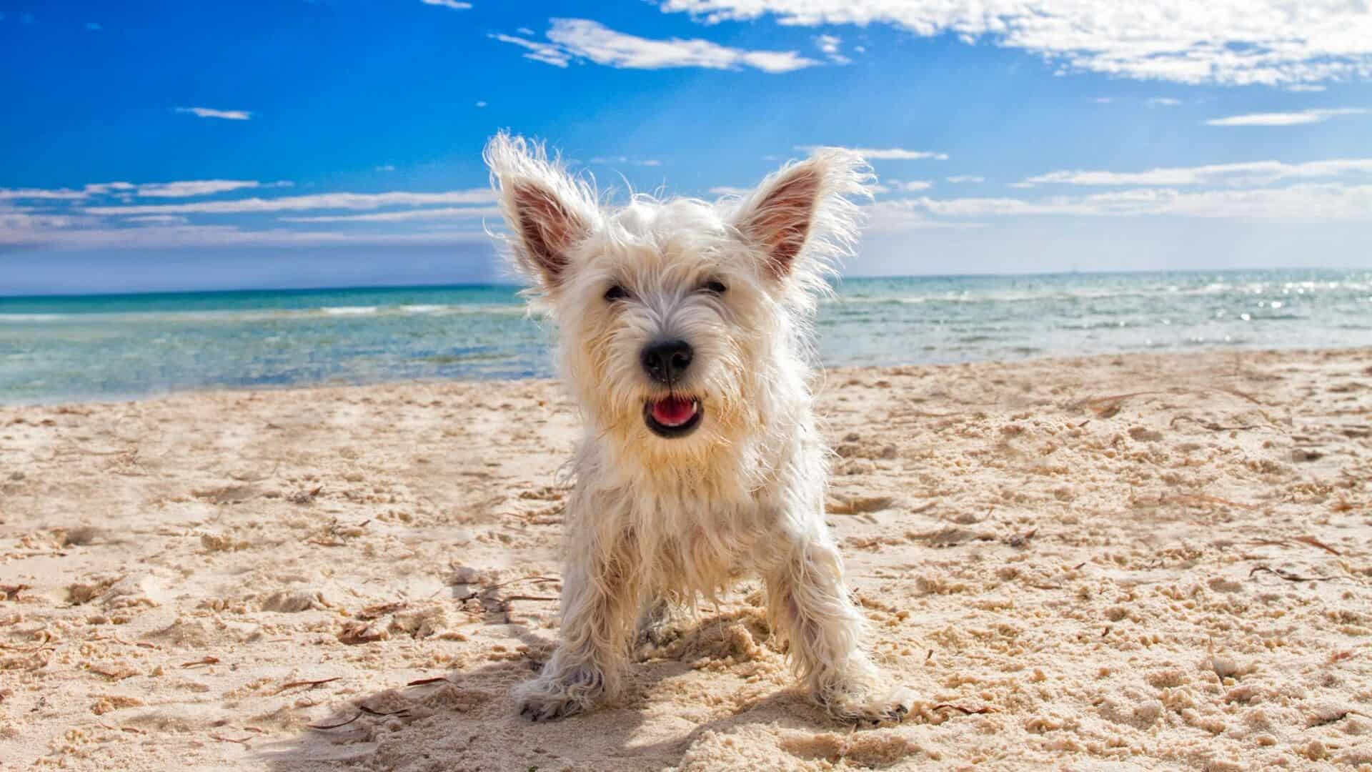 what to bring to the beach with a dog
