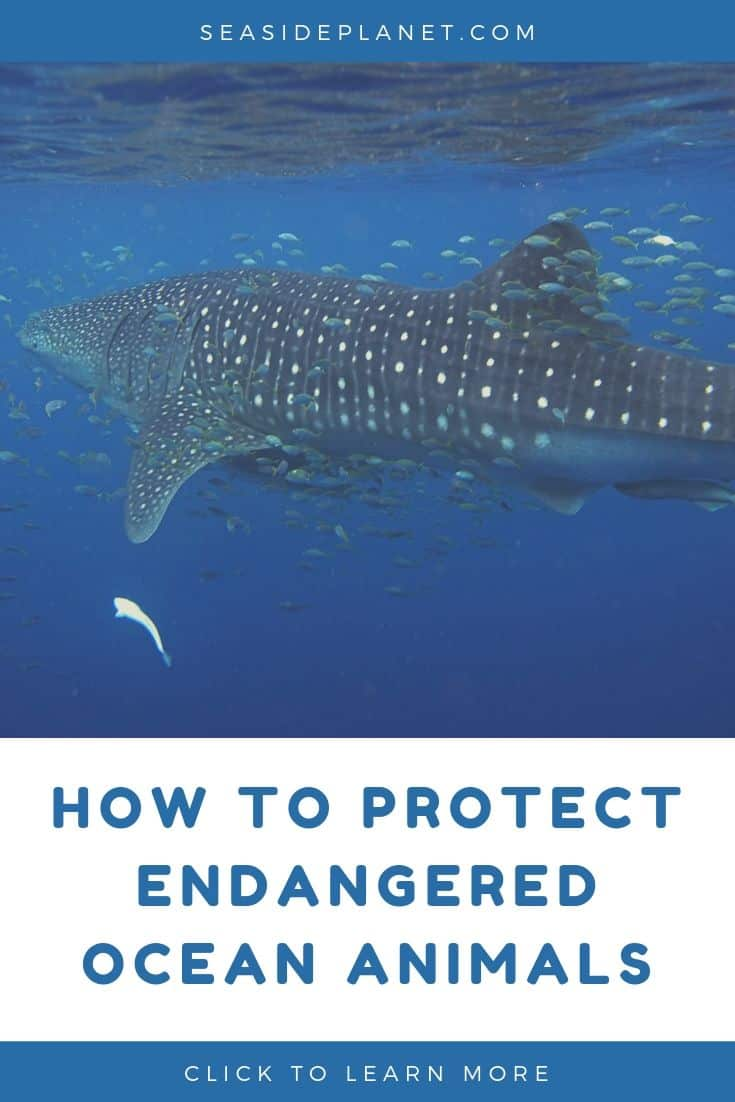 11 Tips for How to Protect Endangered Ocean Animals