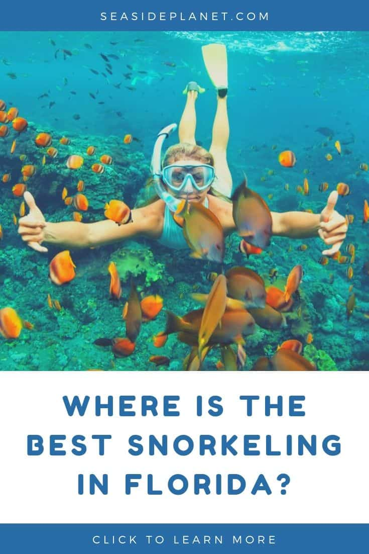 15 of the Best Snorkeling Destinations in Florida [Updated 2021]