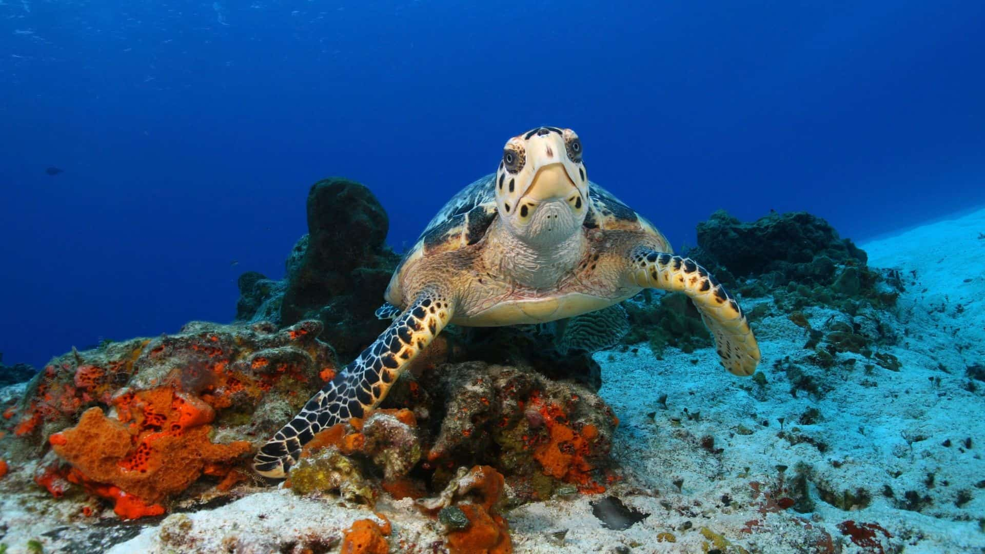 most endangered marine animals