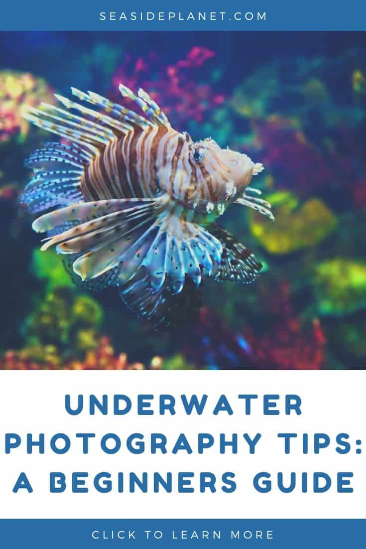 Underwater Photography Tips: A Beginners Guide
