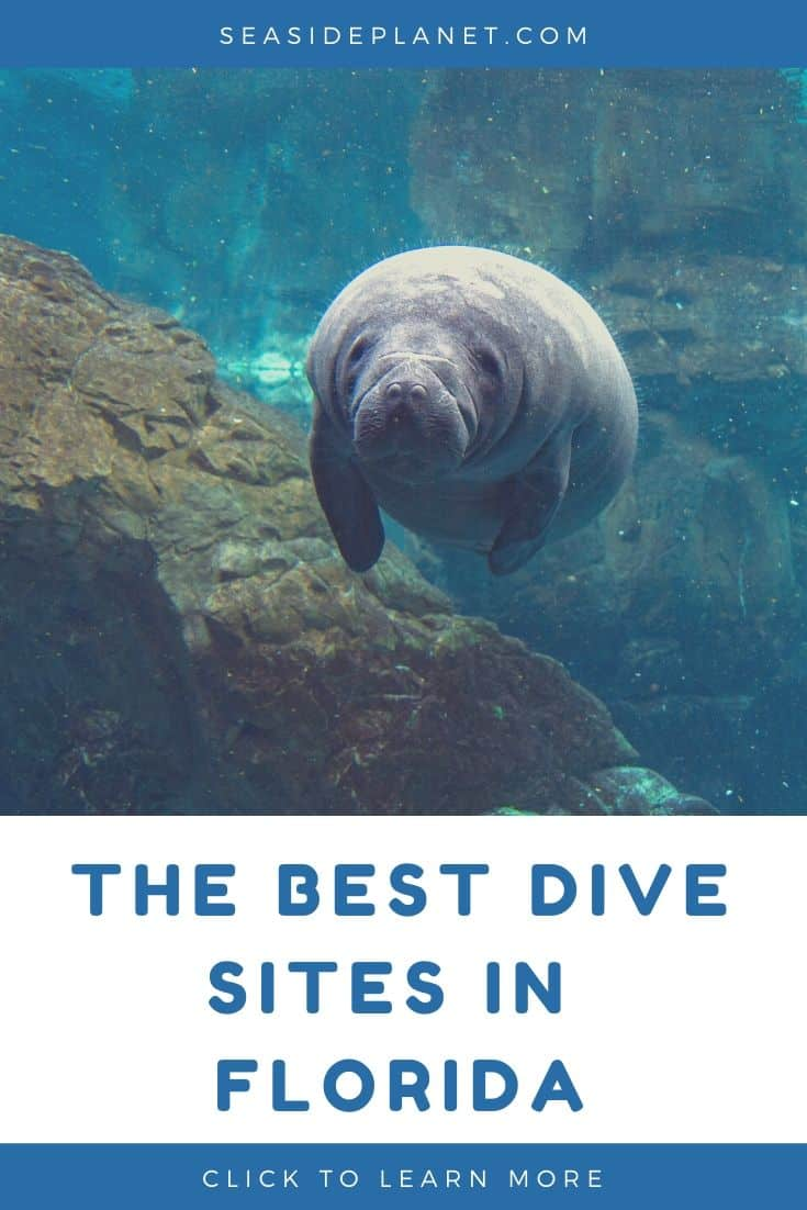 The Best Dive Sites in Florida of 2020