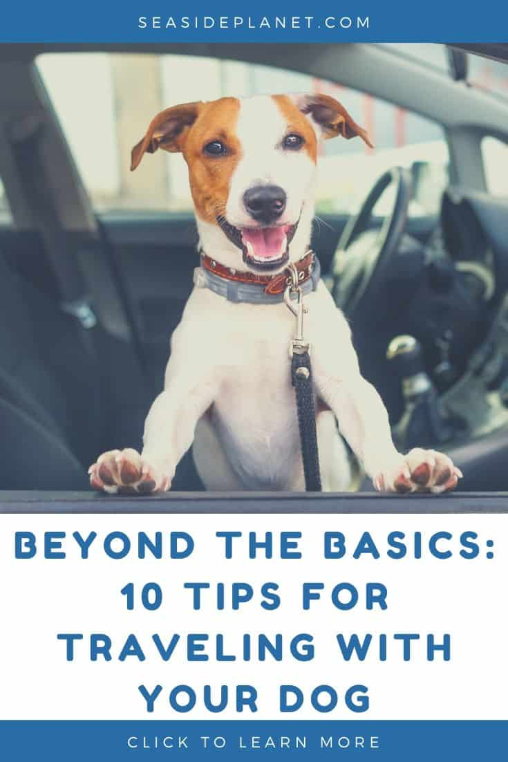 Beyond the Basics: 10 Tips for Traveling With Your Dog