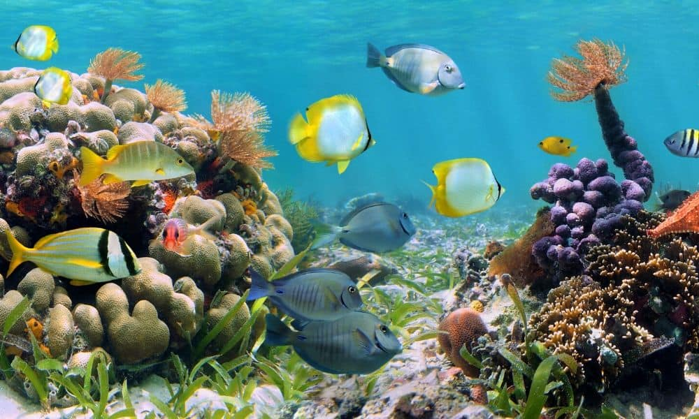fish and coral reef