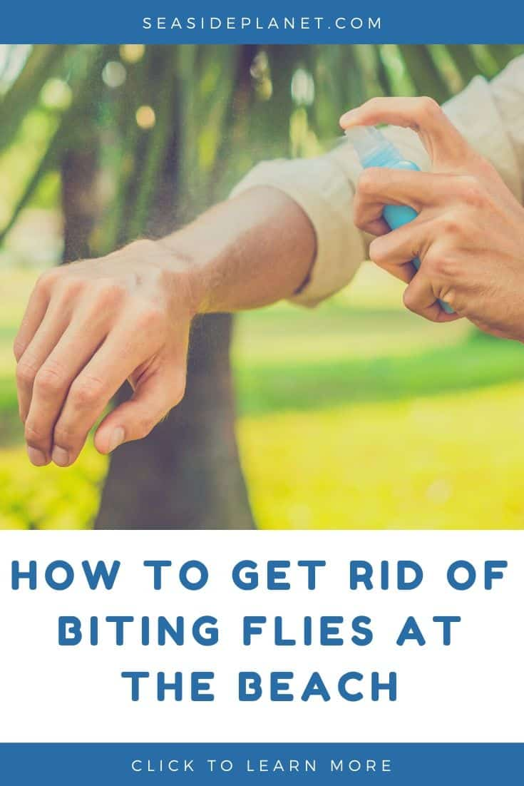 How to Get Rid of Biting Flies at the Beach