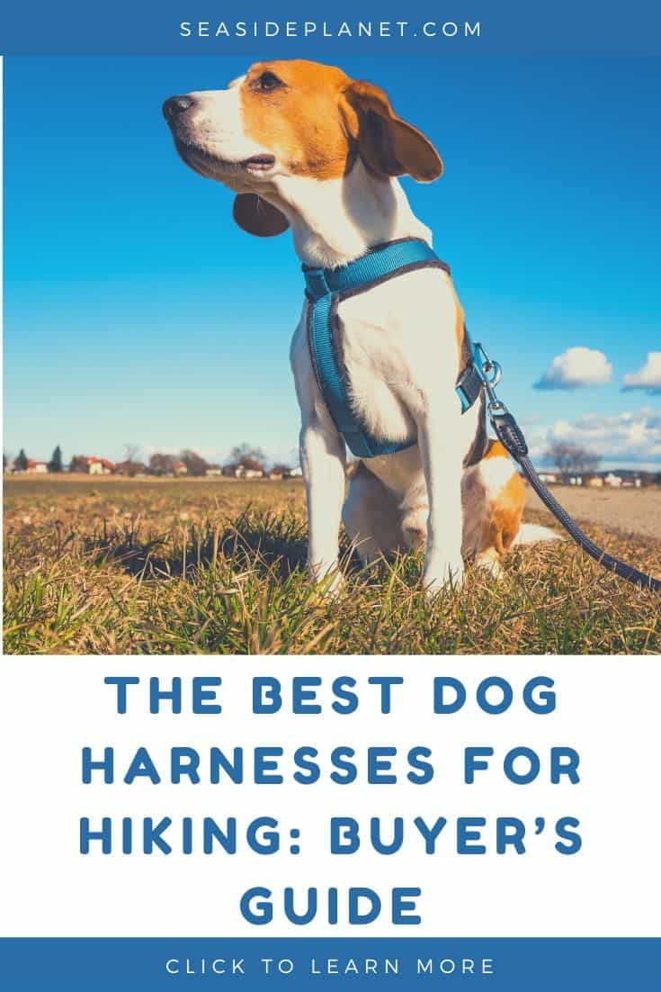 The Best Dog Harnesses for Hiking in 2020: Buyer's Guide