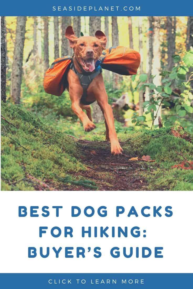 Best Dog Packs for Hiking in 2021: Buyer's Guide