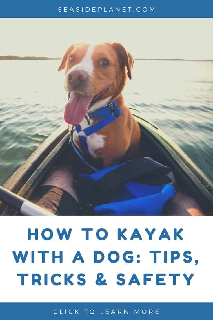 How to Kayak With a Dog: Tips, Tricks & Safety