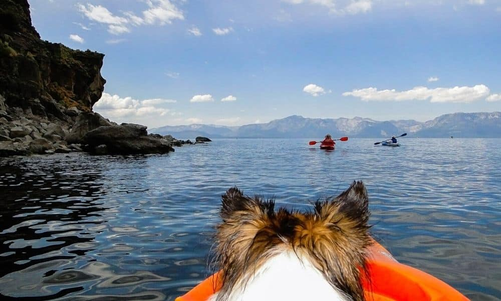 kayaking with a dog on lake