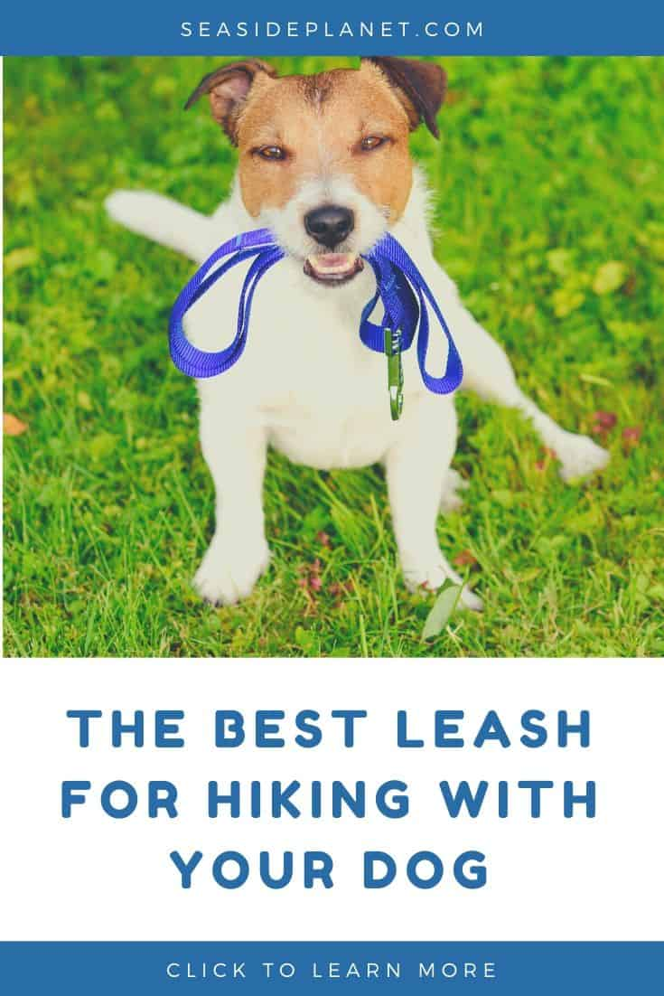 The Best Leashes for Hiking with Your Dog of 2020: Buyer's Guide