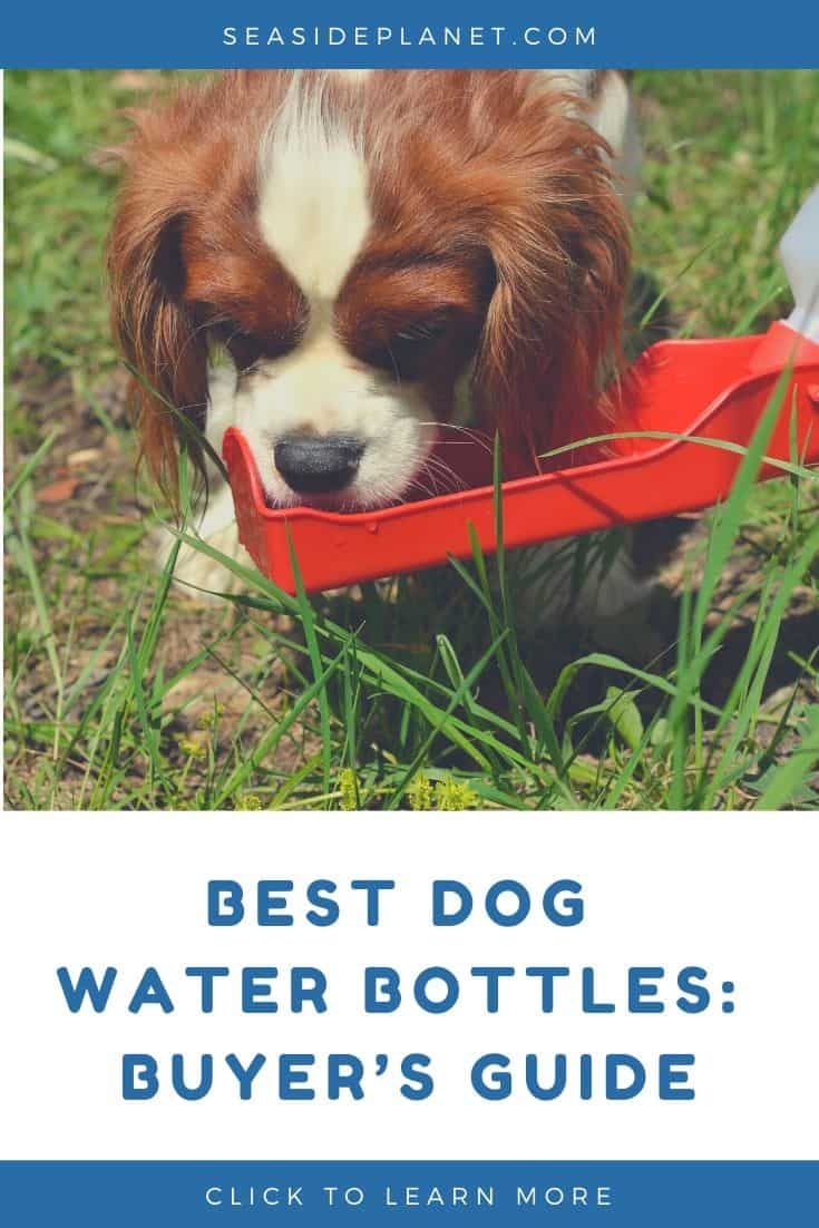 Best Dog Water Bottles in 2021: Buyer's Guide