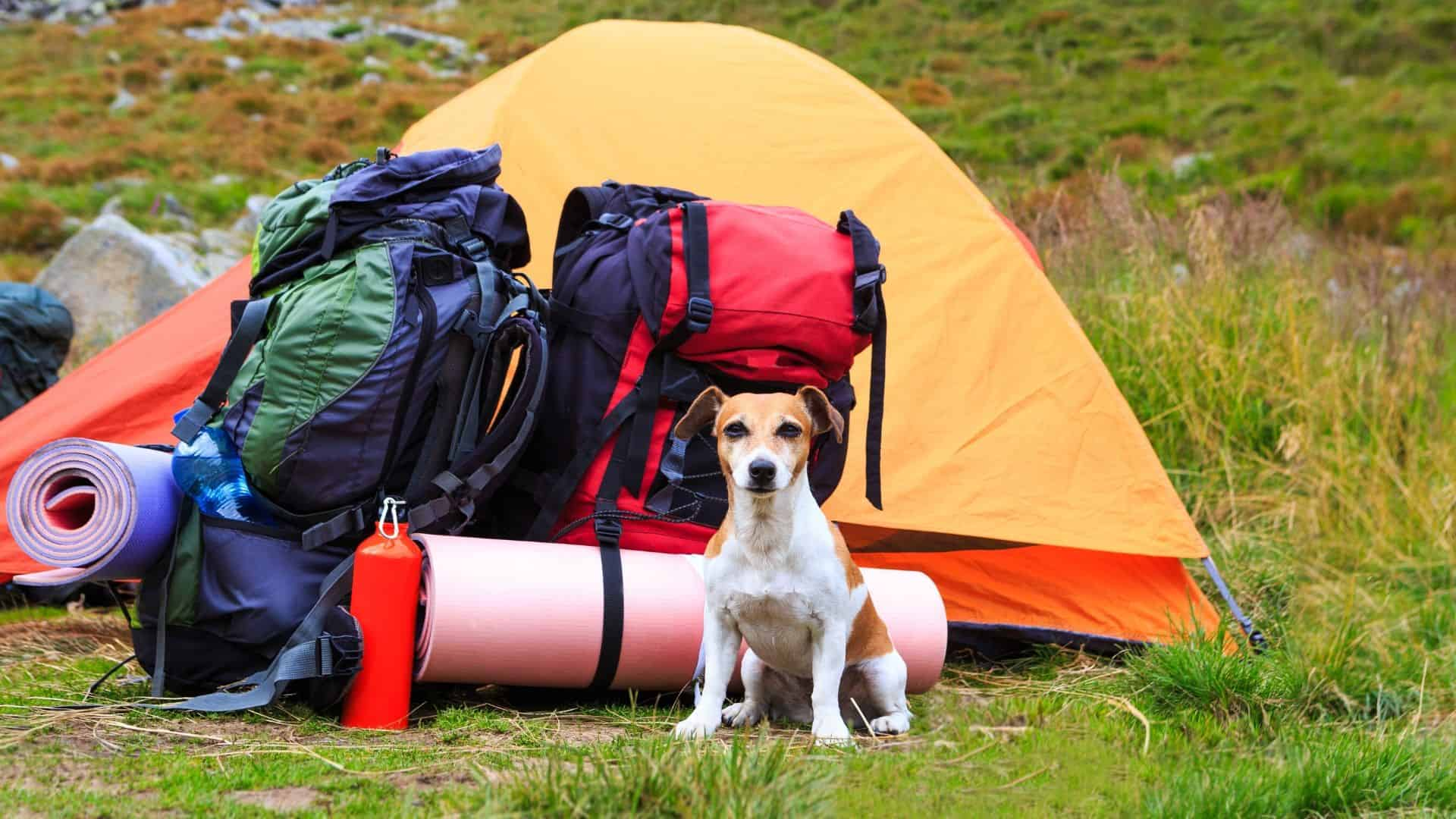 outdoor adventure dog gear list