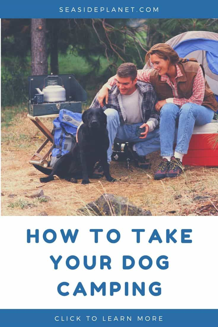 How to Take Your Dog Camping in 2020