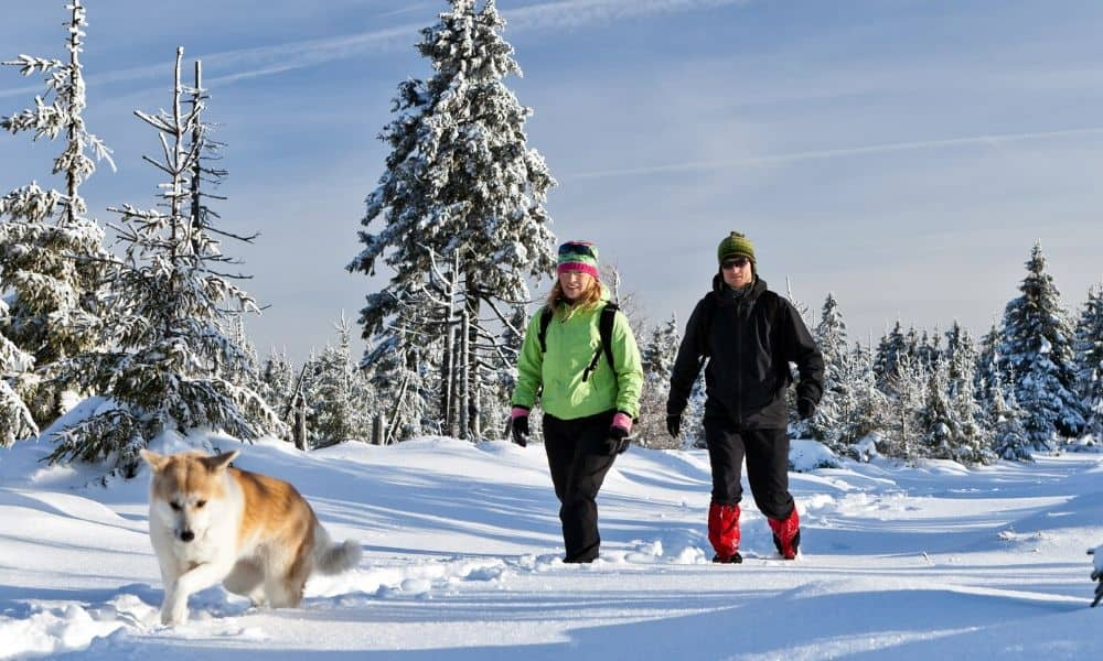 winter hiking with a dog